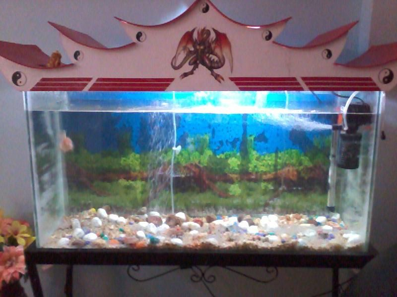 Aquarium for sale in bangalore feet aquarium for sale in for Fish tank care