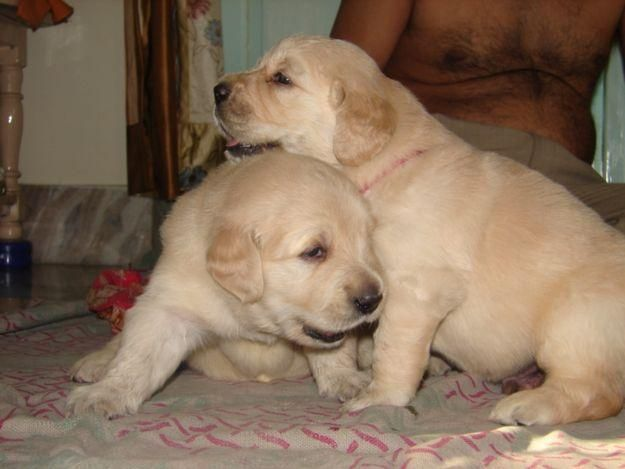 Dogs Cages For Sale In Chennai